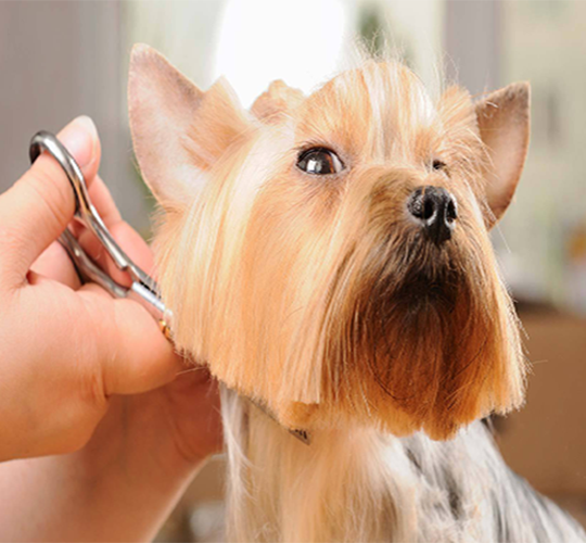 dog grooming calgary