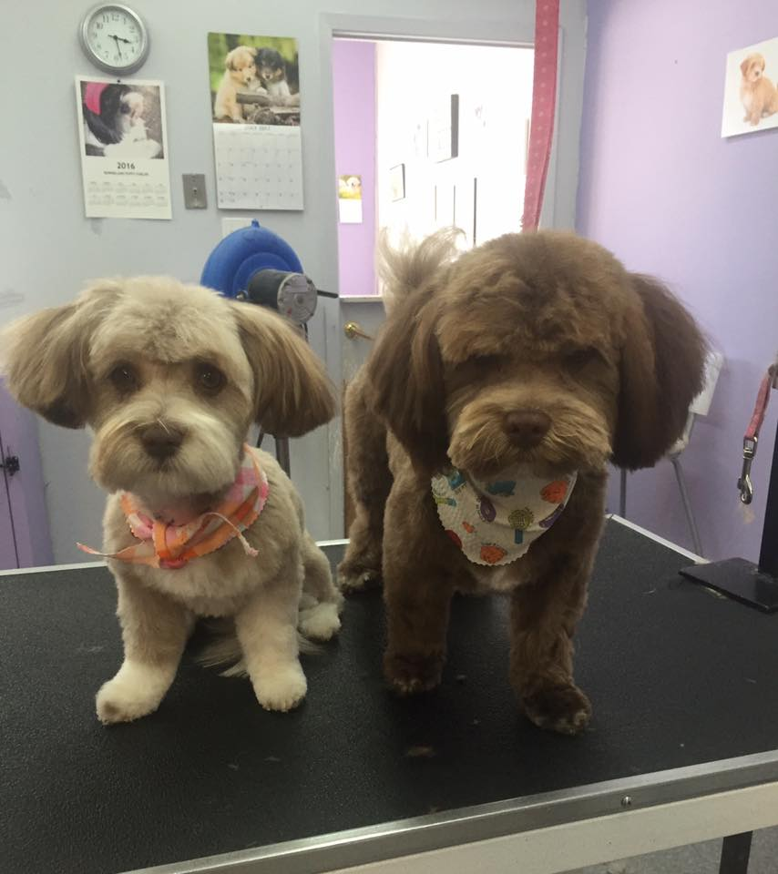 Dog grooming calgary pet groomers in calgary ab book us now two cute puppies in calgary ab solutioingenieria Choice Image