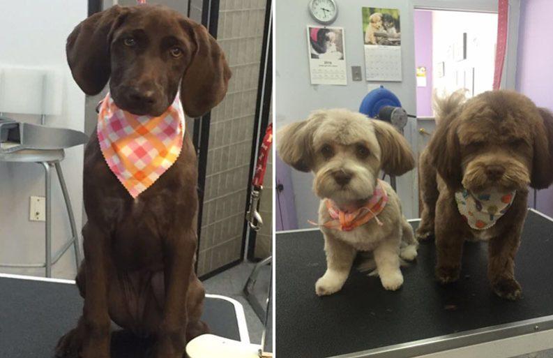 Dog grooming calgary pet groomers in calgary ab book us now puppy parlor near calgary slider solutioingenieria Choice Image