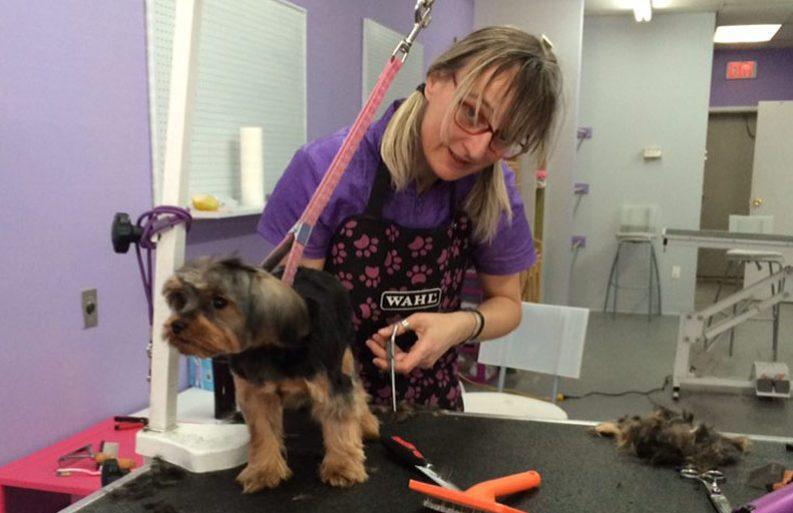 Rosanna-grooming-small-dog-slider