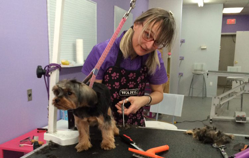 Rosanna-grooming-small-dog-slider